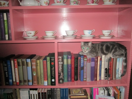 Millie the book loving cat